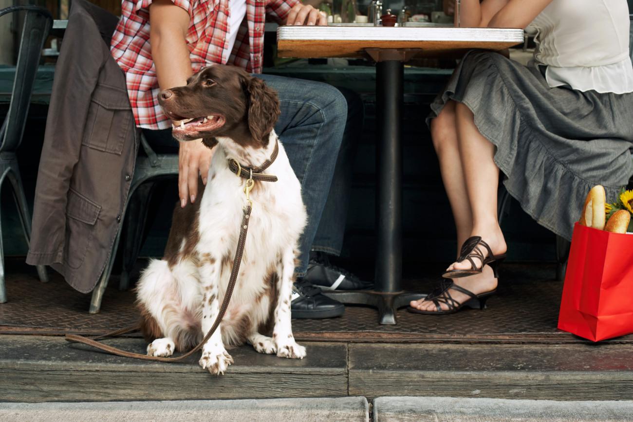 Mit Hund im Restaurant in Südtirol: Hier dürfen Tiere mit